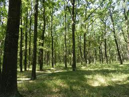 дубовый лес б